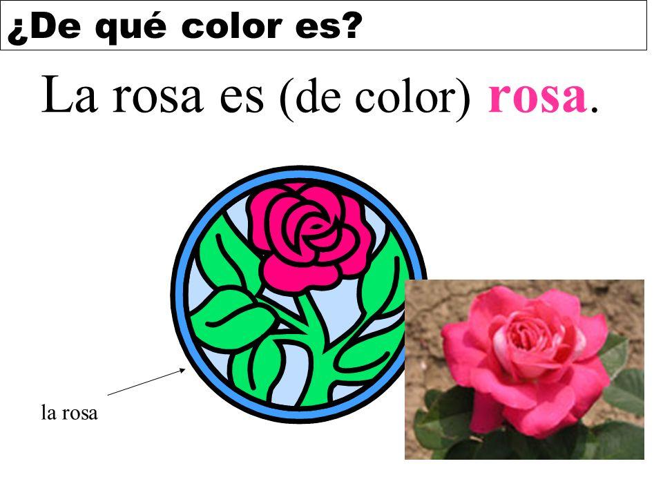 ¿De qué color es? La rosa es (de color) rosa. la rosa