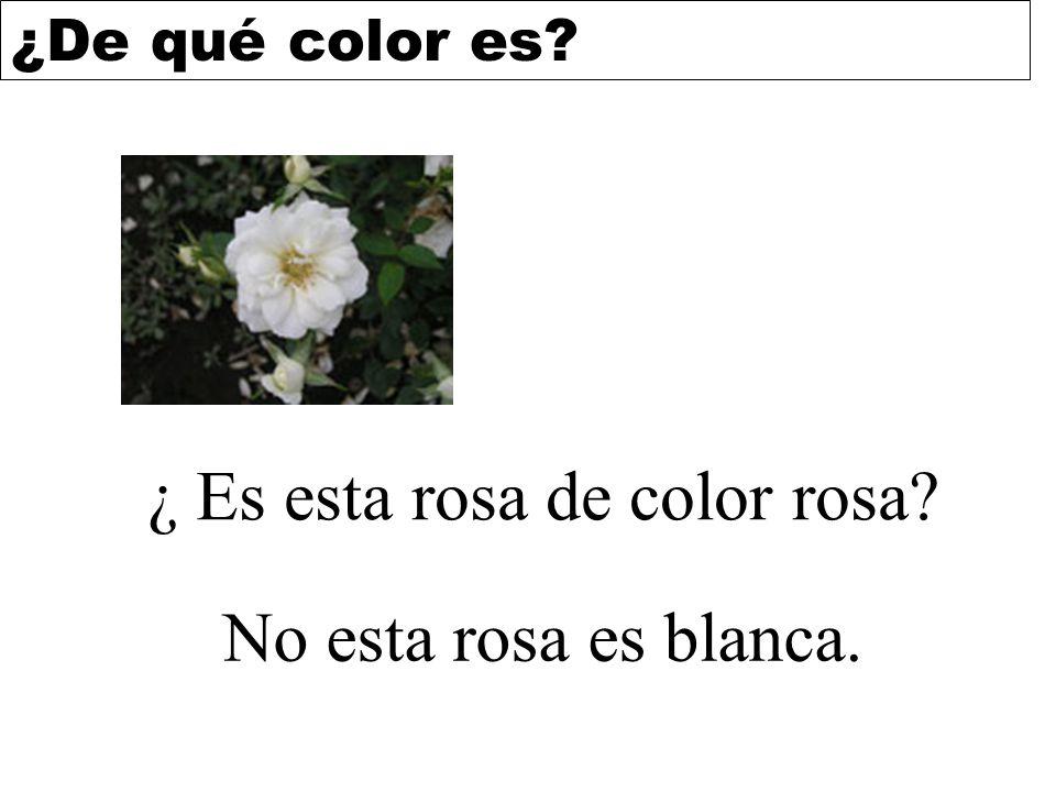 ¿De qué color es? ¿ Es esta rosa de color rosa? No esta rosa es blanca.