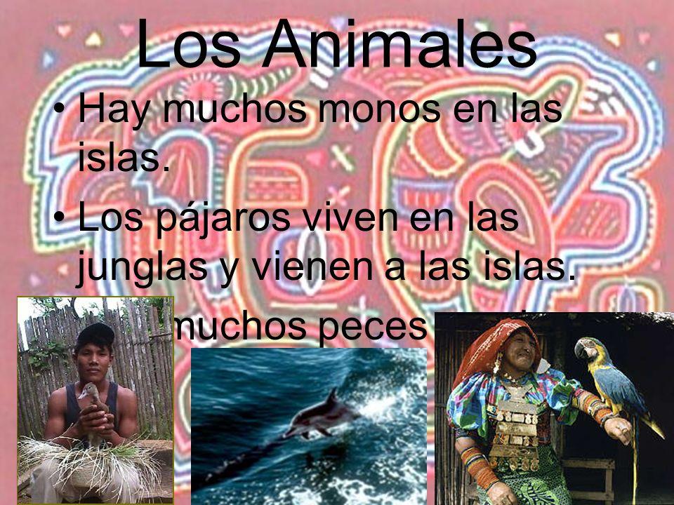 Los Animales Hay muchos monos en las islas. Los pájaros viven en las junglas y vienen a las islas. Hay muchos peces en el mar.