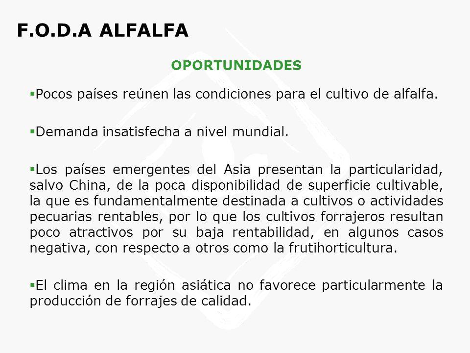 F.O.D.A ALFALFA DEBILIDADES Deficiencia de suministro, transporte y exportación debido al gran volumen de los fardos y rollos.