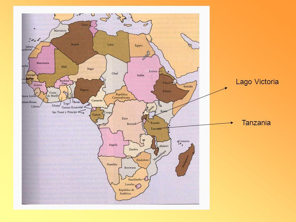Esto ocurre desde que en la década de 1960 introdujeron en este lago la denominada perca del Nilo.