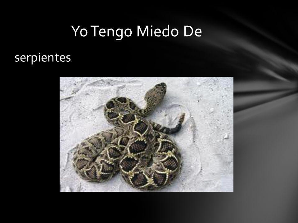 serpientes Yo Tengo Miedo De