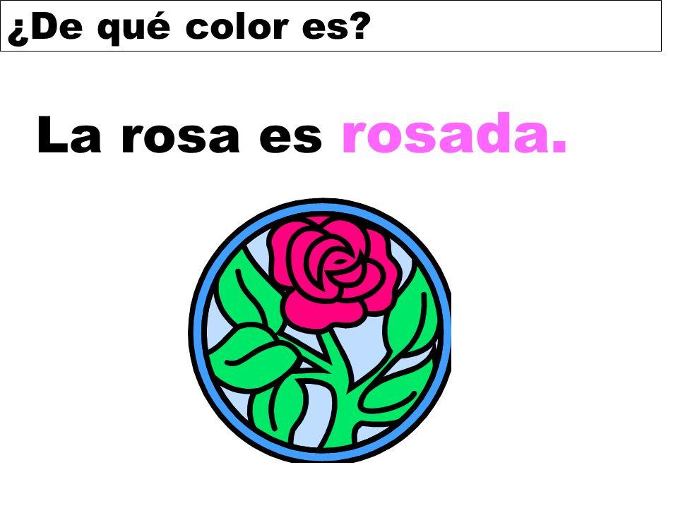¿De qué color es? La rosa es rosada.