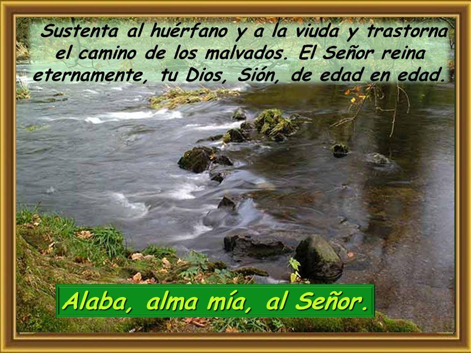 Alaba, alma mía, al Señor. El Señor abre los ojos al ciego, el Señor endereza a los que ya se doblan, el Señor ama a los justos; el Señor guarda a los