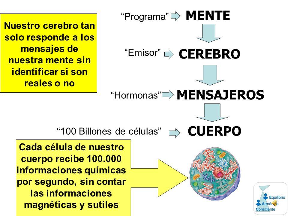 MENTE CEREBRO MENSAJEROS CUERPO Cada célula de nuestro cuerpo recibe 100.000 informaciones químicas por segundo, sin contar las informaciones magnéticas y sutiles Nuestro cerebro tan solo responde a los mensajes de nuestra mente sin identificar si son reales o no Programa Emisor Hormonas 100 Billones de células