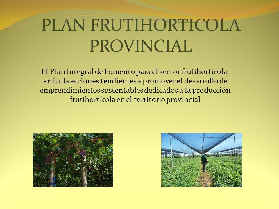 PLAN FRUTIHORTICOLA PROVINCIAL El Plan Integral de Fomento para el sector frutihortícola, articula acciones tendientes a promover el desarrollo de emp