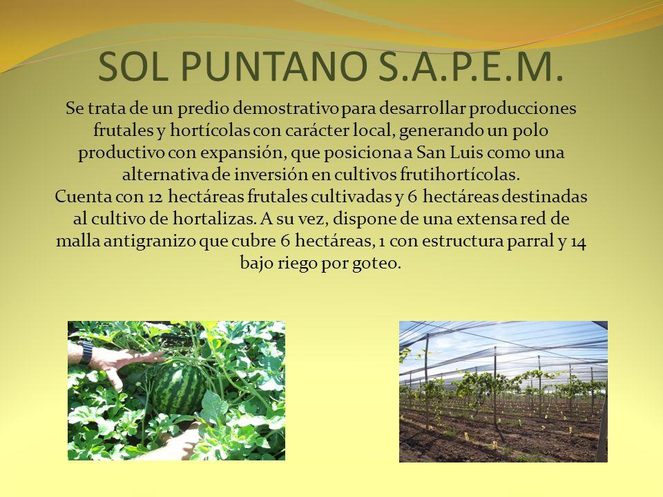 SOL PUNTANO S.A.P.E.M. Se trata de un predio demostrativo para desarrollar producciones frutales y hortícolas con carácter local, generando un polo pr