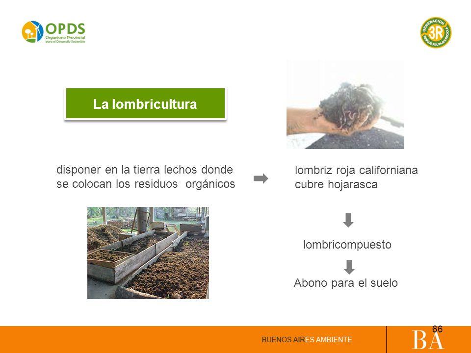 La lombricultura disponer en la tierra lechos donde se colocan los residuos orgánicos lombriz roja californiana cubre hojarasca lombricompuesto Abono