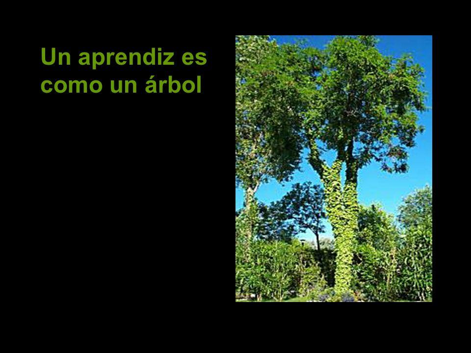 Un aprendiz es como un árbol