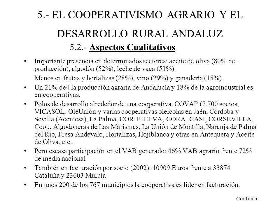5.- EL COOPERATIVISMO AGRARIO Y EL DESARROLLO RURAL ANDALUZ Importante presencia en determinados sectores: aceite de oliva (80% de producción), algodón (52%), leche de vaca (51%).
