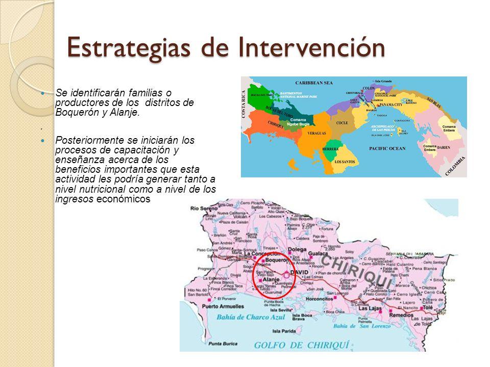 Estrategias de Intervención Se identificarán familias o productores de los distritos de Boquerón y Alanje.. Posteriormente se iniciarán los procesos d