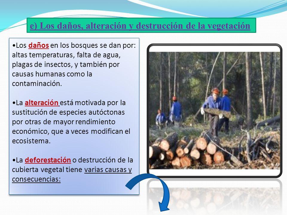 e) Los daños, alteración y destrucción de la vegetación Los daños en los bosques se dan por: altas temperaturas, falta de agua, plagas de insectos, y
