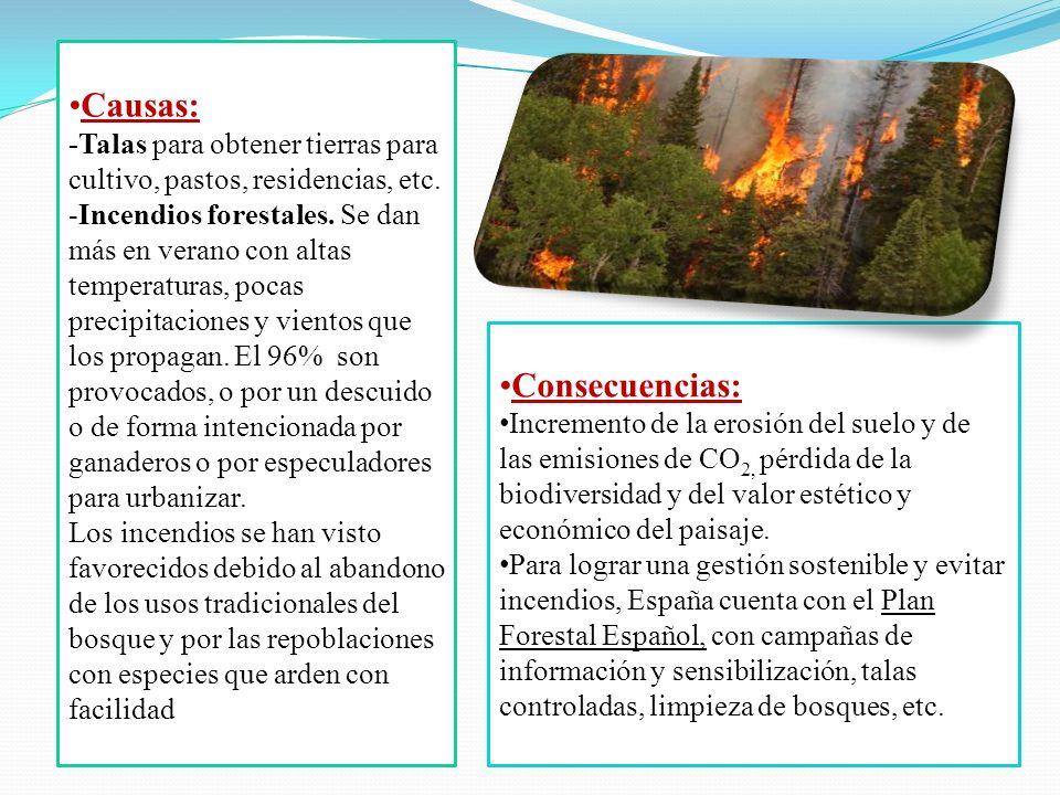 Causas: -Talas para obtener tierras para cultivo, pastos, residencias, etc. -Incendios forestales. Se dan más en verano con altas temperaturas, pocas