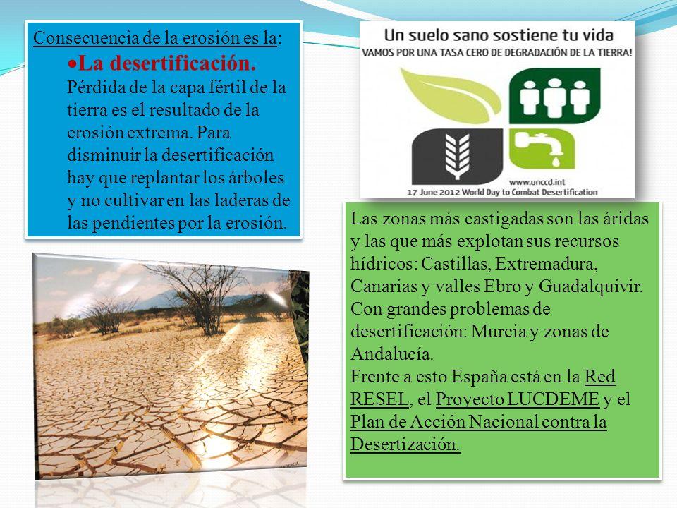 Consecuencia de la erosión es la: La desertificación. Pérdida de la capa fértil de la tierra es el resultado de la erosión extrema. Para disminuir la