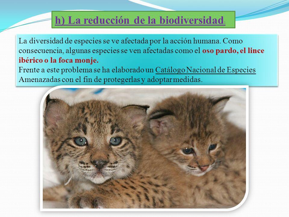 h) La reducción de la biodiversidad : La diversidad de especies se ve afectada por la acción humana. Como consecuencia, algunas especies se ven afecta