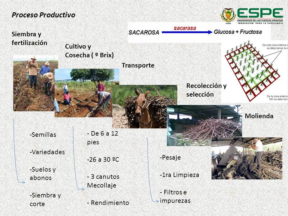 Cultivo y Cosecha ( º Brix) Siembra y fertilización Transporte Molienda Proceso Productivo -Semillas -Variedades -Suelos y abonos -Siembra y corte - D