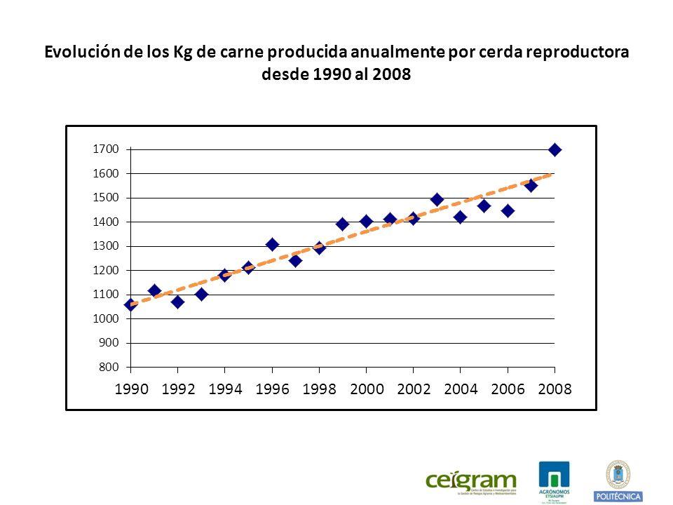 Evolución de los Kg de carne producida anualmente por cerda reproductora desde 1990 al 2008