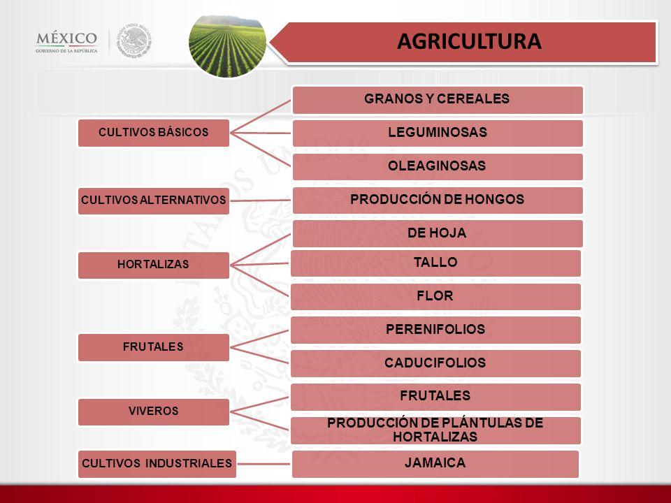 CULTIVOS BÁSICOS GRANOS Y CEREALESLEGUMINOSASOLEAGINOSAS CULTIVOS ALTERNATIVOS PRODUCCIÓN DE HONGOS HORTALIZAS DE HOJATALLOFLOR FRUTALES PERENIFOLIOSCADUCIFOLIOS VIVEROS FRUTALES PRODUCCIÓN DE PLÁNTULAS DE HORTALIZAS CULTIVOS INDUSTRIALES JAMAICA AGRICULTURA