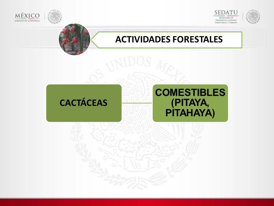 ACTIVIDADES FORESTALES CACTÁCEAS COMESTIBLES (PITAYA, PITAHAYA)