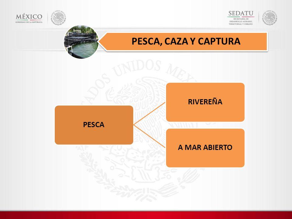 PESCARIVEREÑAA MAR ABIERTO PESCA, CAZA Y CAPTURA