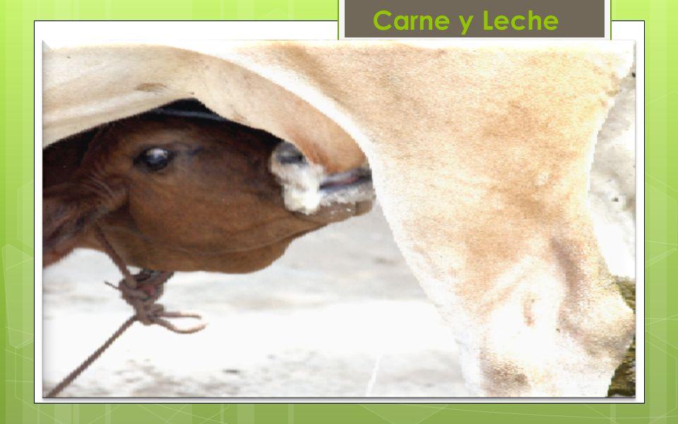 Carne y Leche