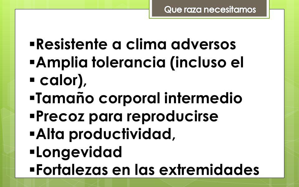 Resistente a clima adversos Amplia tolerancia (incluso el calor), Tamaño corporal intermedio Precoz para reproducirse Alta productividad, Longevidad F