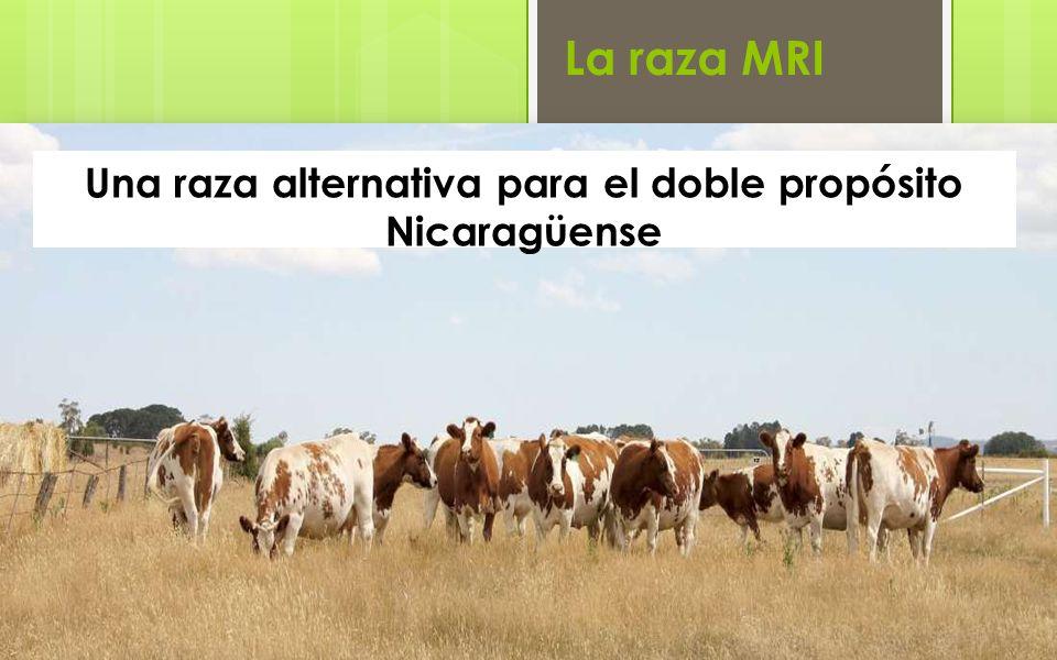 La raza MRI Una raza alternativa para el doble propósito Nicaragüense