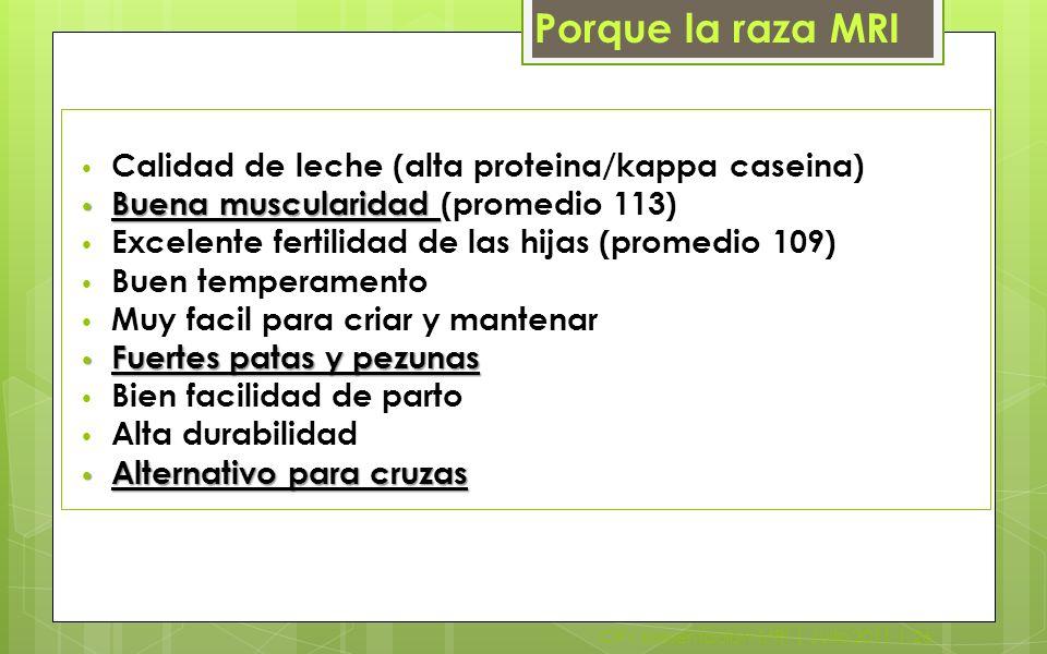 CRV presentacion MRI | Julio 2011 | 26 Calidad de leche (alta proteina/kappa caseina) Buena muscularidad Buena muscularidad (promedio 113) Excelente f
