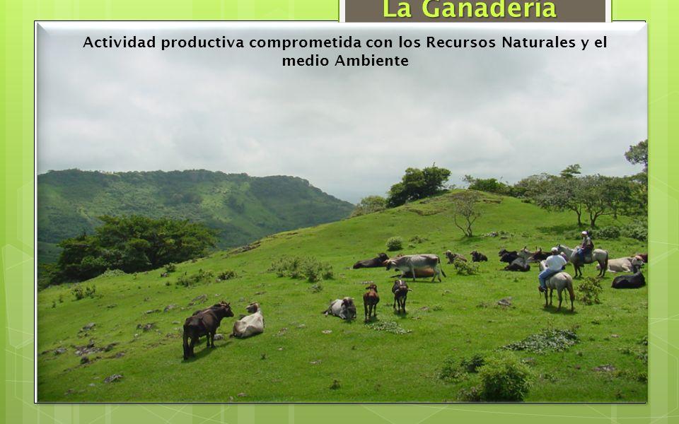 Actividad productiva comprometida con los Recursos Naturales y el medio Ambiente La Ganadería
