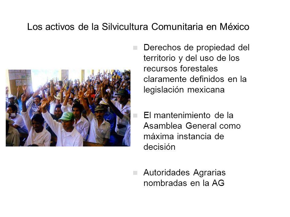Los activos de la Silvicultura Comunitaria en México Derechos de propiedad del territorio y del uso de los recursos forestales claramente definidos en