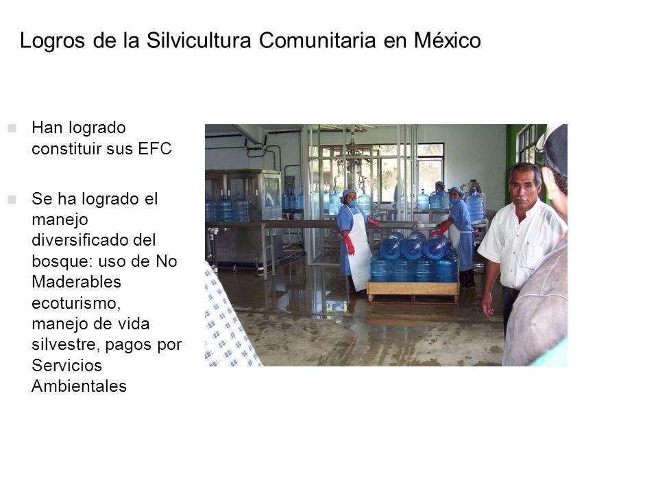 Logros de la Silvicultura Comunitaria en México Han logrado constituir sus EFC Se ha logrado el manejo diversificado del bosque: uso de No Maderables