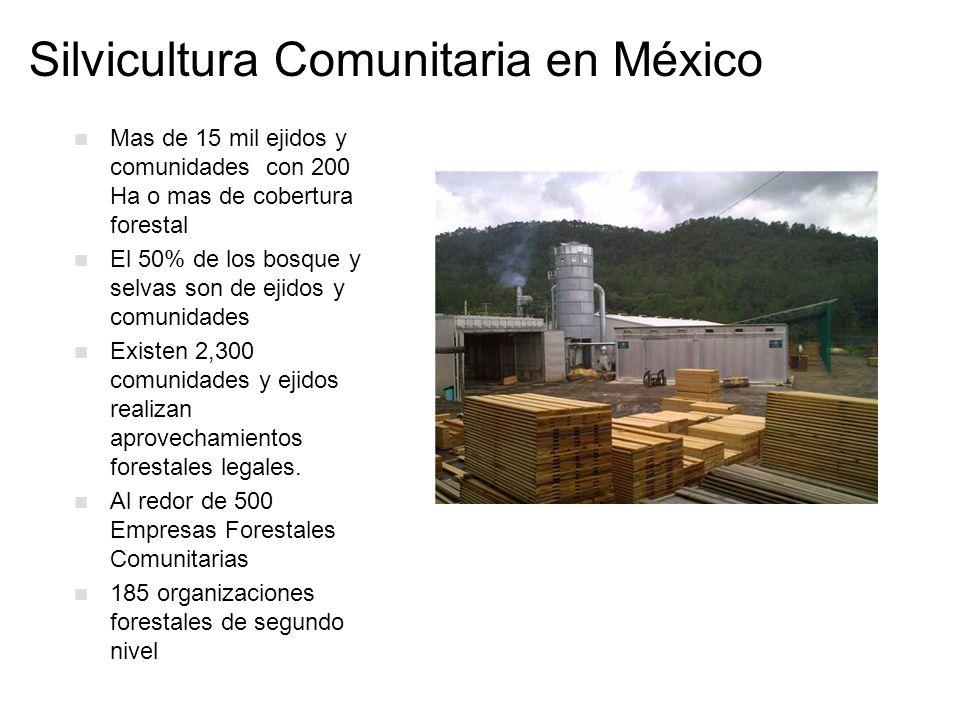 Silvicultura Comunitaria en México Mas de 15 mil ejidos y comunidades con 200 Ha o mas de cobertura forestal El 50% de los bosque y selvas son de ejid