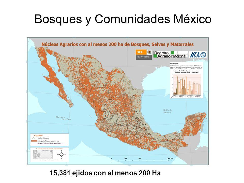 Avances de la silvicultura en México 1.