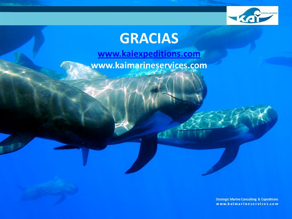 Strategic Marine Consulting & Expeditions w w w. k a i m a r i n e s e r v i c e s.c o m GRACIAS www.kaiexpeditions.com www.kaimarineservices.com