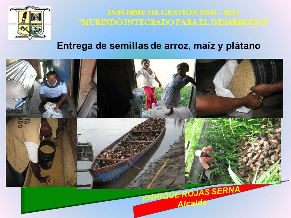 INFORME DE GESTIÓN 2008 – 2011 MURINDÓ INTEGRADO PARA EL DESARROLLO ENRIQUE ROJAS SERNA Alcalde Entrega de semillas de arroz, maíz y plátano