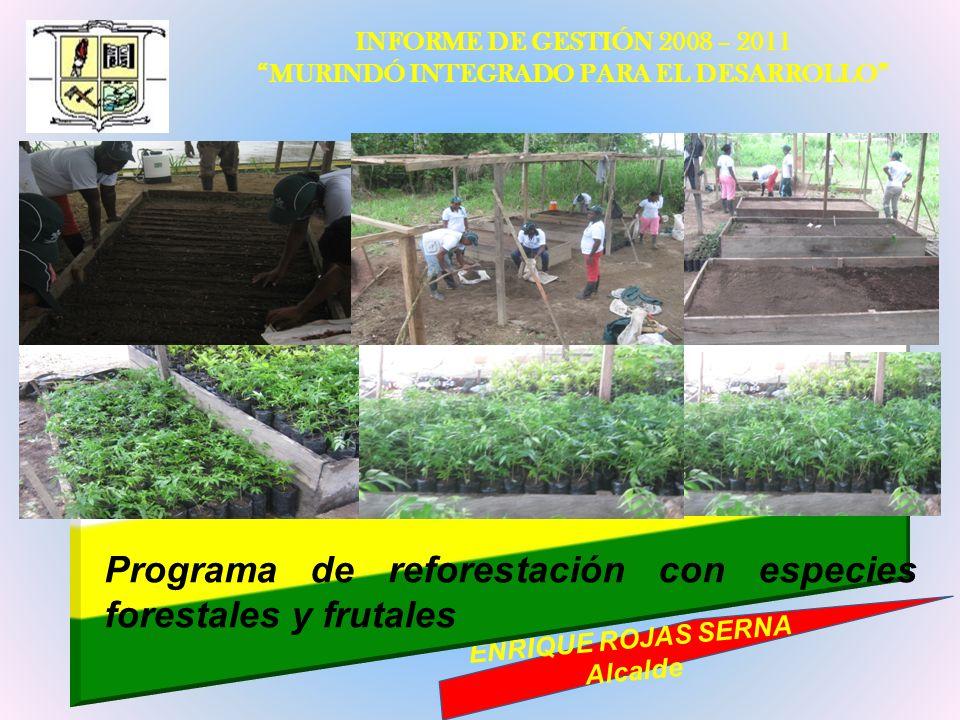 INFORME DE GESTIÓN 2008 – 2011 MURINDÓ INTEGRADO PARA EL DESARROLLO ENRIQUE ROJAS SERNA Alcalde Programa de reforestación con especies forestales y fr
