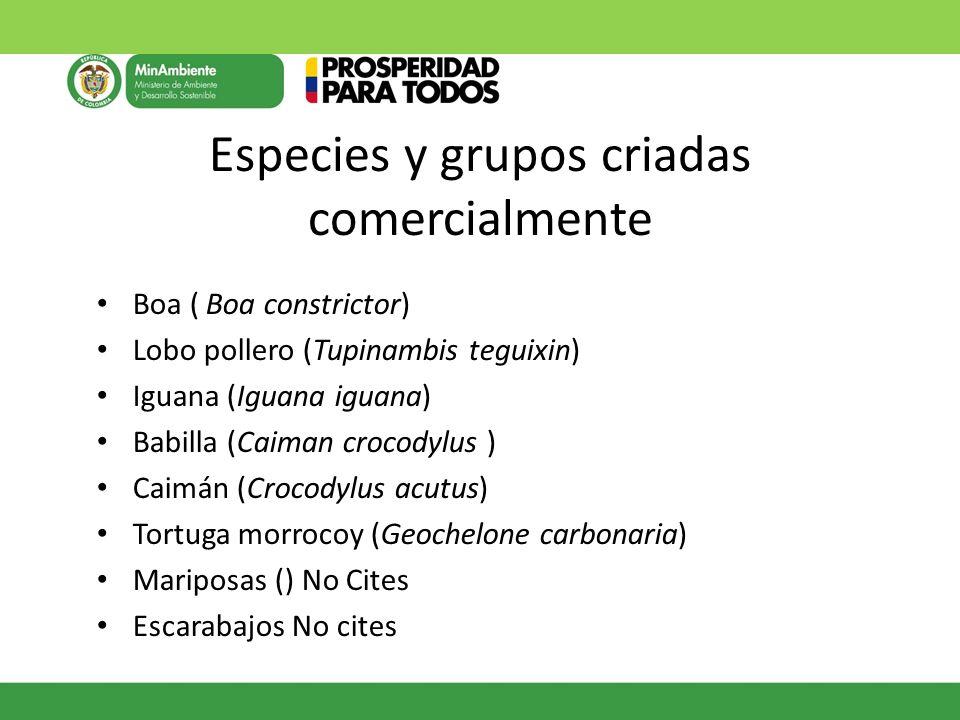 Especies y grupos criadas comercialmente Boa ( Boa constrictor) Lobo pollero (Tupinambis teguixin) Iguana (Iguana iguana) Babilla (Caiman crocodylus )