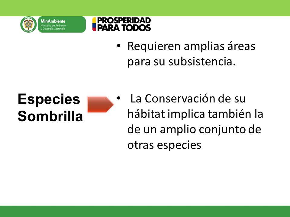 Requieren amplias áreas para su subsistencia. La Conservación de su hábitat implica también la de un amplio conjunto de otras especies Especies Sombri
