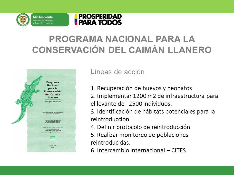 PROGRAMA NACIONAL PARA LA CONSERVACIÓN DEL CAIMÁN LLANERO Líneas de acción 1. Recuperación de huevos y neonatos 2. Implementar 1200 m2 de infraestruct