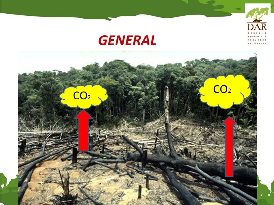 Más de un quinto del potencial mundial de mitigación es REDD Source: The Terrestrial Carbon Group.
