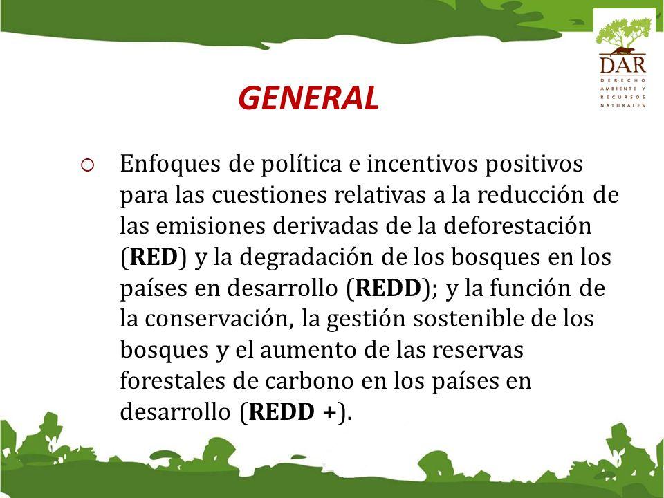 GENERAL REDREDDREDD + Reducción de la deforestaciónXXX Reducción de la degradaciónXX ConservaciónX Manejo sostenible de los bosquesX Aumento de las existencias de carbono forestal X