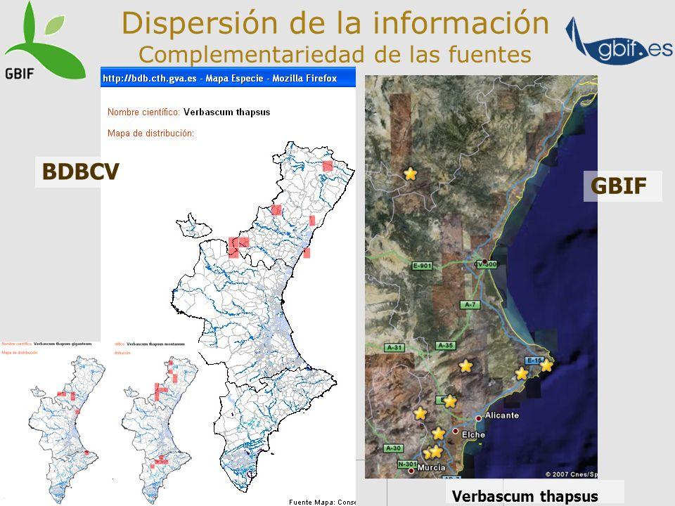 Dispersión de la información Complementariedad de las fuentes Comparativa Anthos- BDVC-GBIF viernes, 16 de febrero de 2007 11:49 Verbascum thapsus BDB