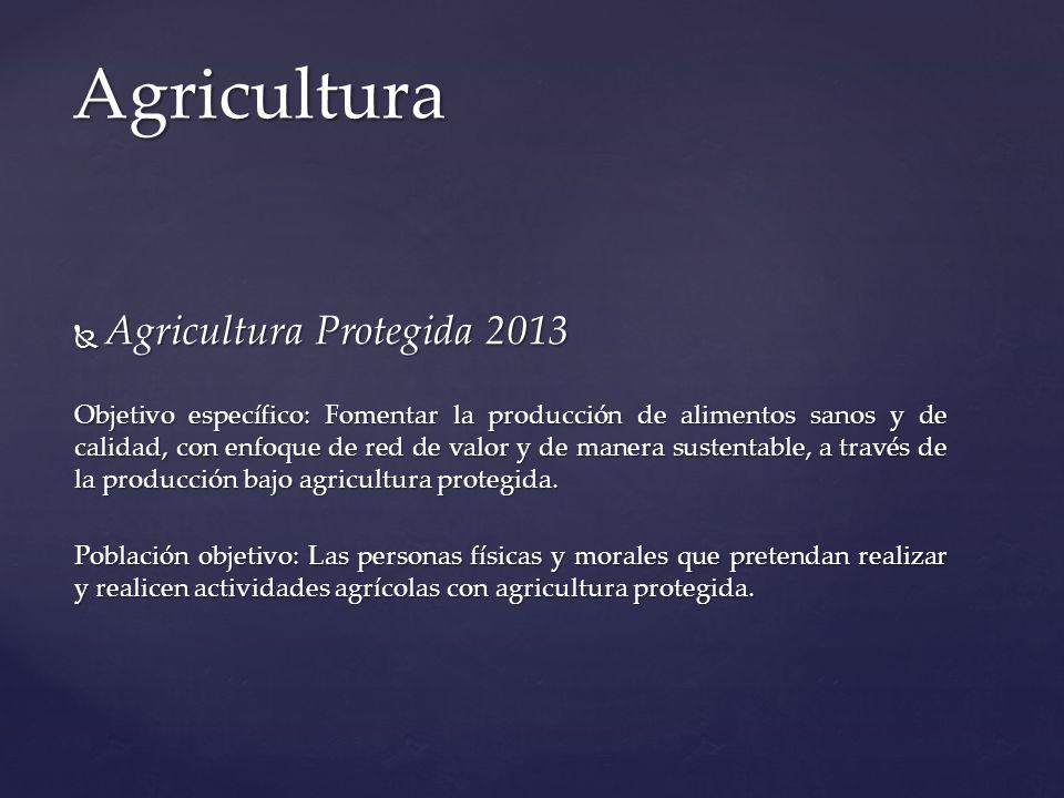 Agricultura Protegida 2013 Agricultura Protegida 2013 Objetivo específico: Fomentar la producción de alimentos sanos y de calidad, con enfoque de re