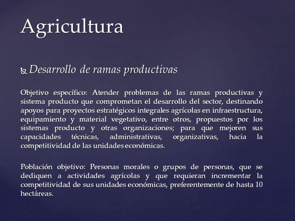 Desarrollo de ramas productivas Desarrollo de ramas productivas Objetivo específico: Atender problemas de las ramas productivas y sistema producto que