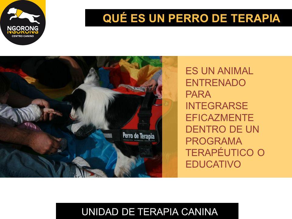 UNIDAD DE TERAPIA CANINA ES UN ANIMAL ENTRENADO PARA INTEGRARSE EFICAZMENTE DENTRO DE UN PROGRAMA TERAPÉUTICO O EDUCATIVO QUÉ ES UN PERRO DE TERAPIA