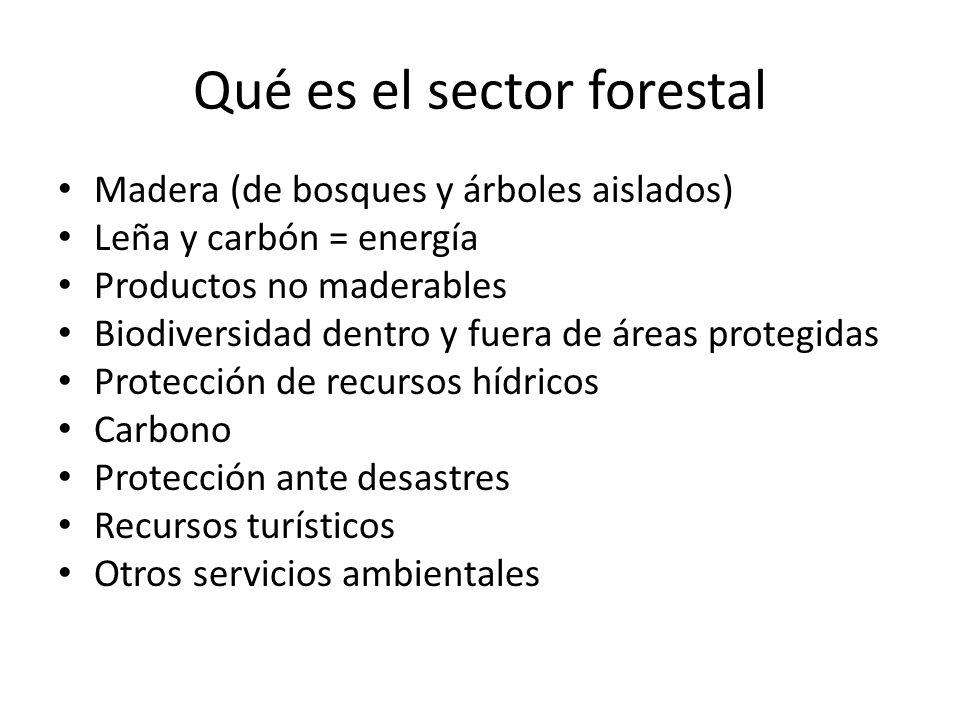Qué es el sector forestal Madera (de bosques y árboles aislados) Leña y carbón = energía Productos no maderables Biodiversidad dentro y fuera de áreas protegidas Protección de recursos hídricos Carbono Protección ante desastres Recursos turísticos Otros servicios ambientales