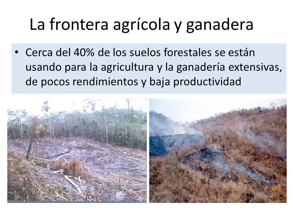 La frontera agrícola y ganadera Cerca del 40% de los suelos forestales se están usando para la agricultura y la ganadería extensivas, de pocos rendimientos y baja productividad