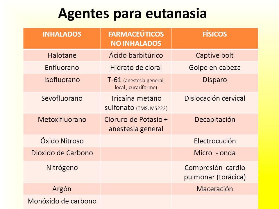 Agentes para eutanasia INHALADOSFARMACEÚTICOS NO INHALADOS FÍSICOS HalotaneÁcido barbitúricoCaptive bolt EnfluoranoHidrato de cloralGolpe en cabeza Is