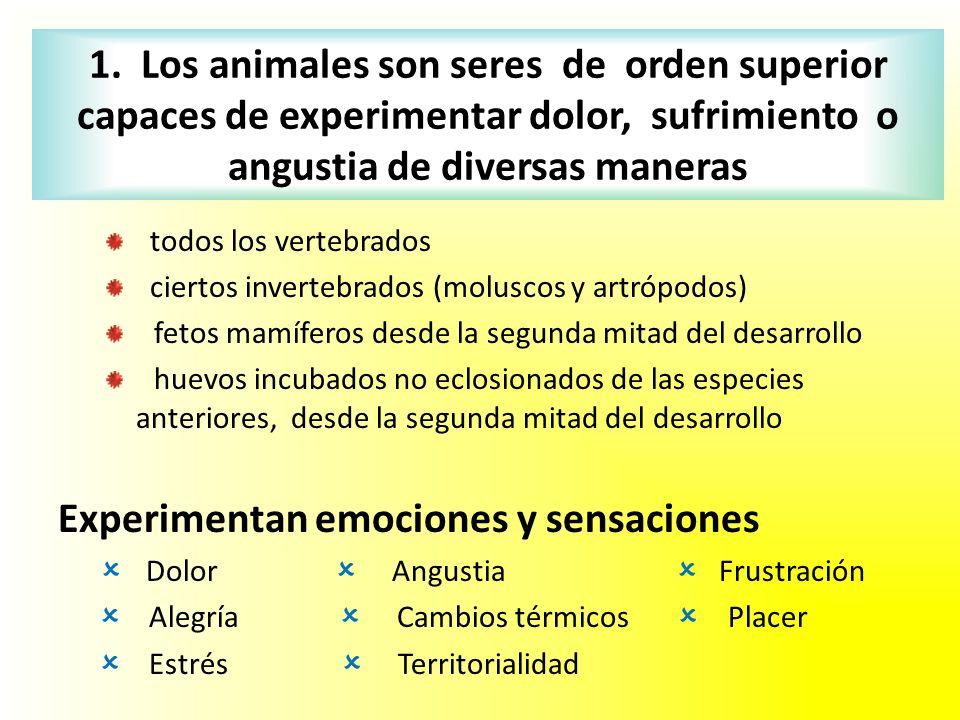 1. Los animales son seres de orden superior capaces de experimentar dolor, sufrimiento o angustia de diversas maneras todos los vertebrados ciertos in