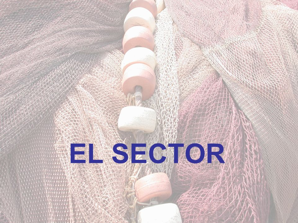 EL SECTOR